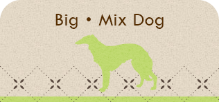 Big・Mix Dog
